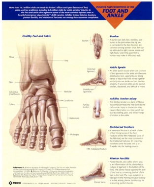 Foot & Ankle Fact Sheet
